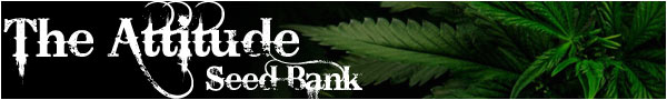 the attitude cannabis seeds bank