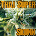 free g13 labs power skunk from the attitude seed bank